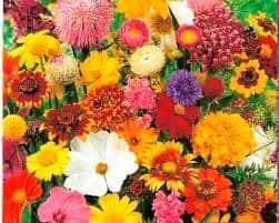 Buquê de 9 flores Minas