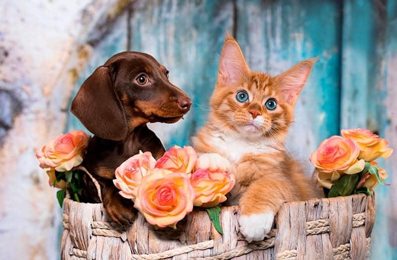 floral pet